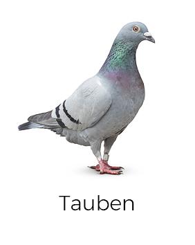 Tauben vergrämen / abwehren - AML Schädlingsbekämpfung