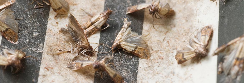 Motten bekämpfen / entfernen - AML Schädlingsbekämpfung