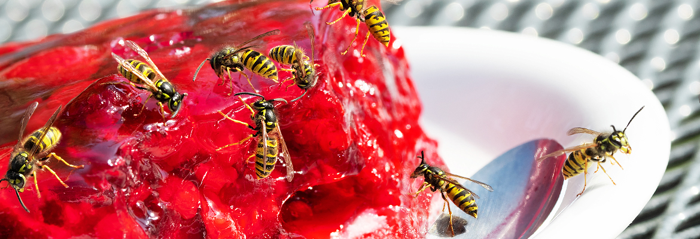 Wespen bekämpfen / entfernen - AML Schädlingsbekämpfung