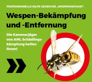 Wespen-Bekämpfung und -Entfernung in Stuttgart, Backnang, Ludwigsburg und Heilbronn